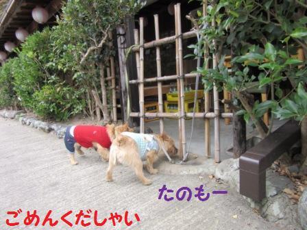 IMG_320715・10・22まと嵐山