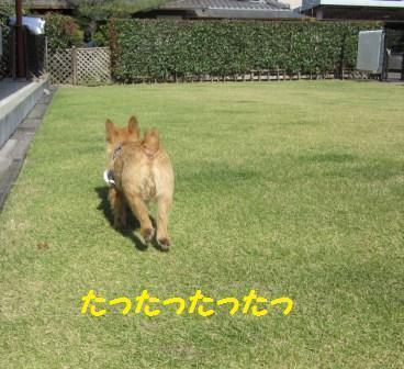 IMG_3467 15・10・26京ちゃん
