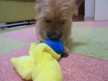 IMG_365015・12・3おもちゃ