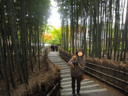 IMG_223112・12嵐山