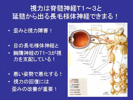 目の支配神経