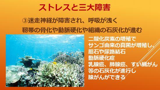 サンゴ由来の真菌