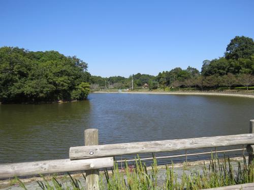 坂田ヶ池ー2