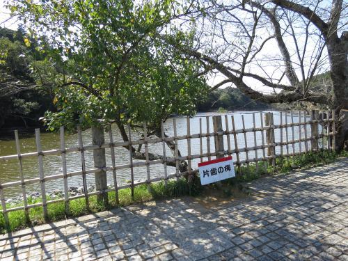 坂田ヶ池ー77