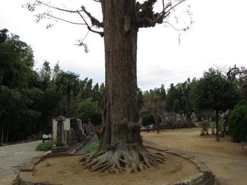 大経寺ー3