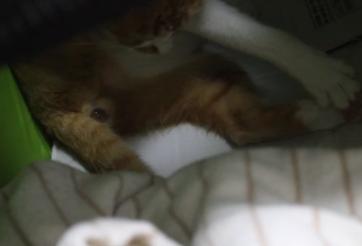しんこ出産 (3)