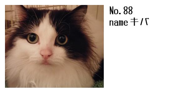 88.jpg