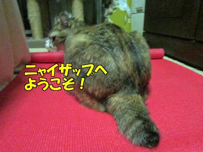 151013-011.jpg