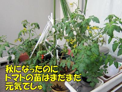 151024-01.jpg
