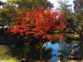 有栖川記念公園紅葉