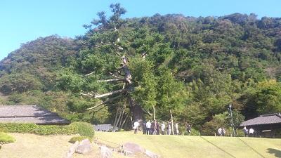 桜島2 磯庭園2