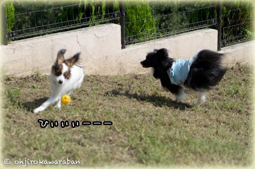 14*14-DSC_5437