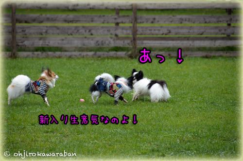11*11-DSC_5928
