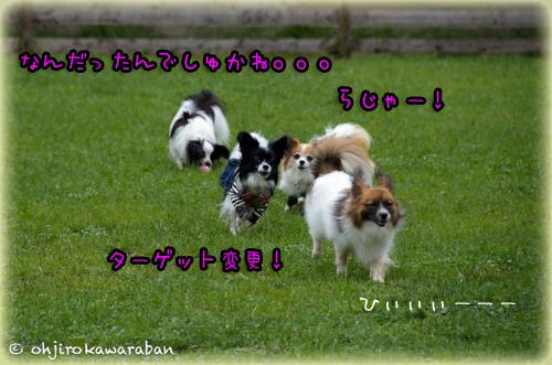 12*12-DSC_5929
