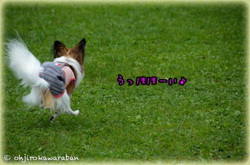 27*11-DSC_6050