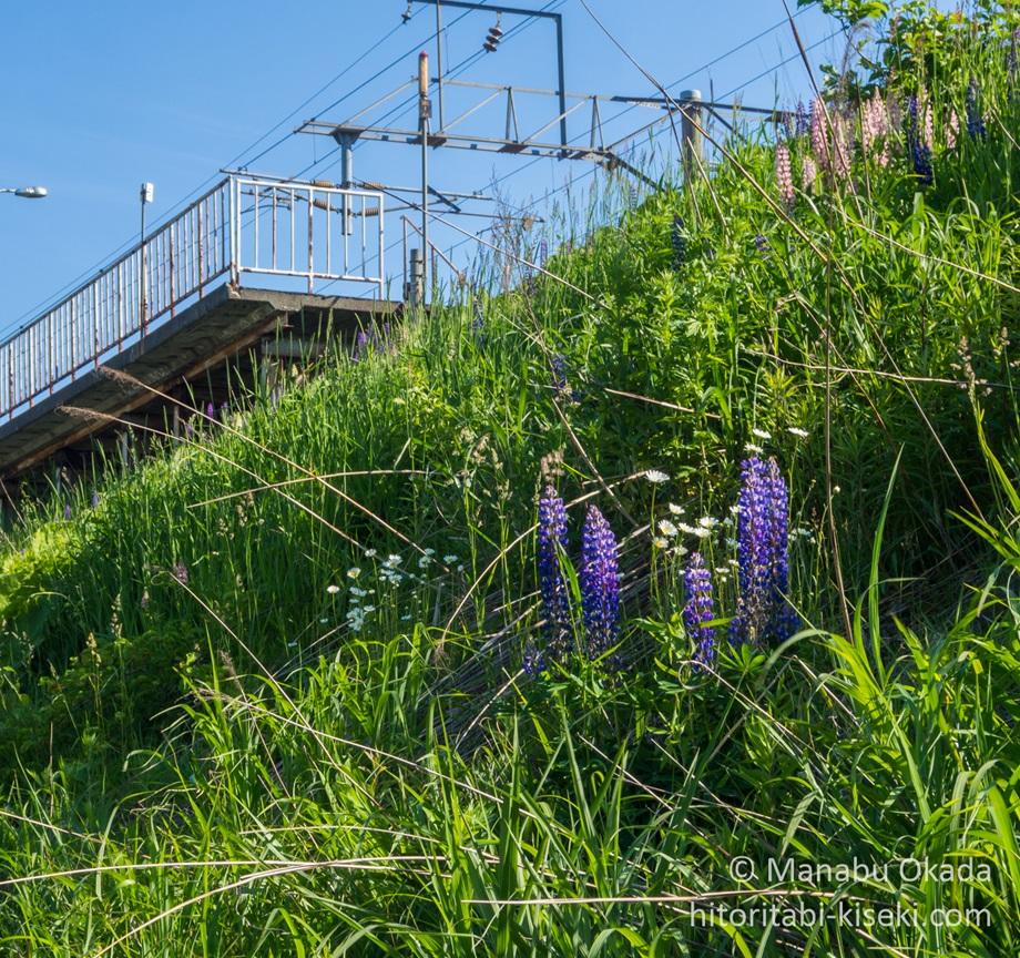 鉄道周辺に咲く花