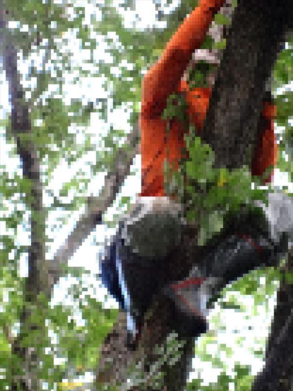 木登り_R