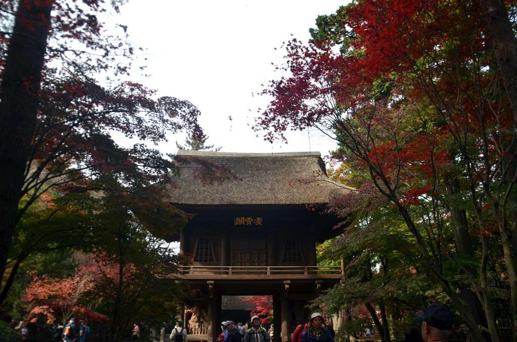 D70_7972平林寺