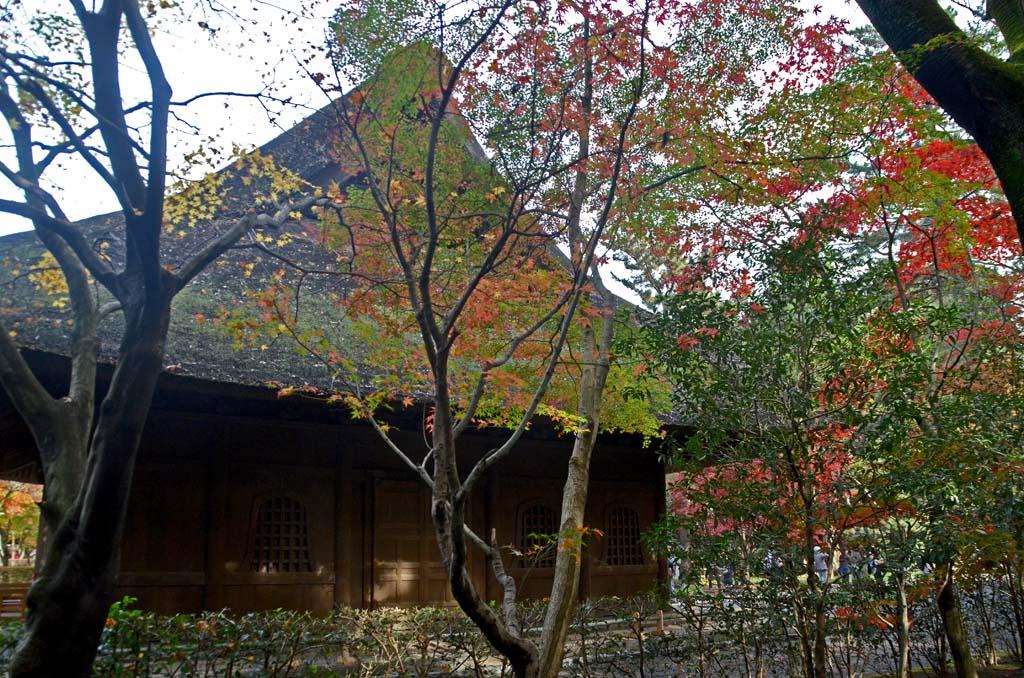 D70_8056平林寺