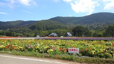 シャトレーゼリゾートから野辺山駅に向かう途中に素敵なお花畑がありました。