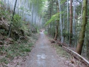 20151024_16町石道竹林