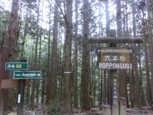20151024_26町石道六本杉