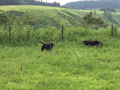 牛。。。ではありまちぇん