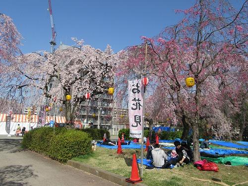 1604sakura2005.jpg