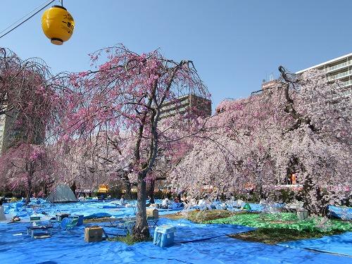 1604sakura2006.jpg