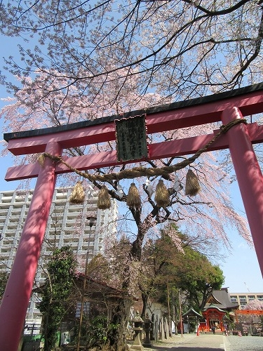 1604sakura2008.jpg