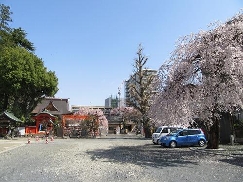 1604sakura2009.jpg