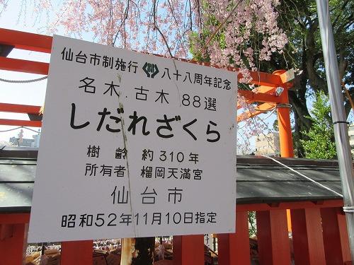 1604sakura2012.jpg