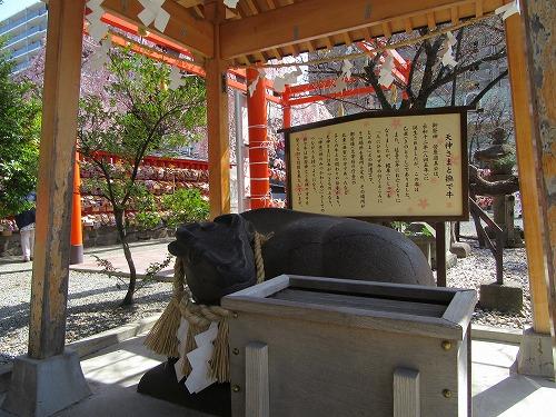 1604sakura2013.jpg
