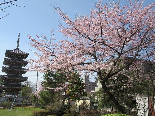 1604sakura2016.jpg