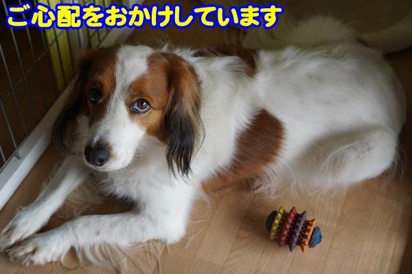 2_20151018124452980.jpg