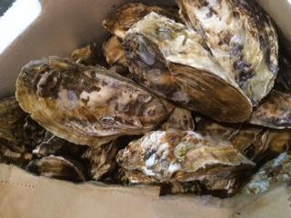 兵庫県赤穂生牡蠣