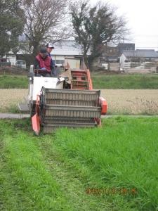 大麦若葉の刈り取り