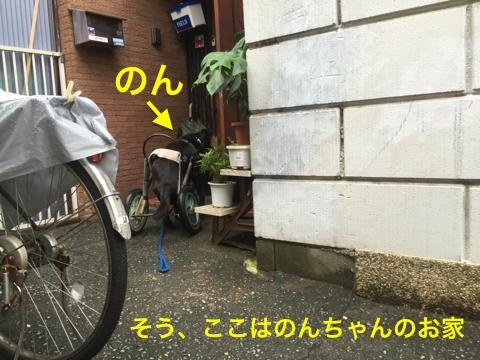 th_IMG_5020.jpg
