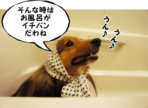 ヨッシーさんちのひめちゃん