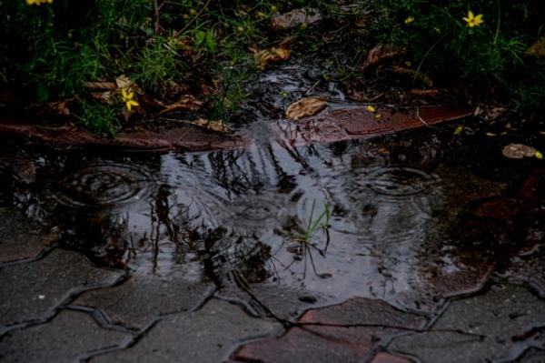 水たまり-4618