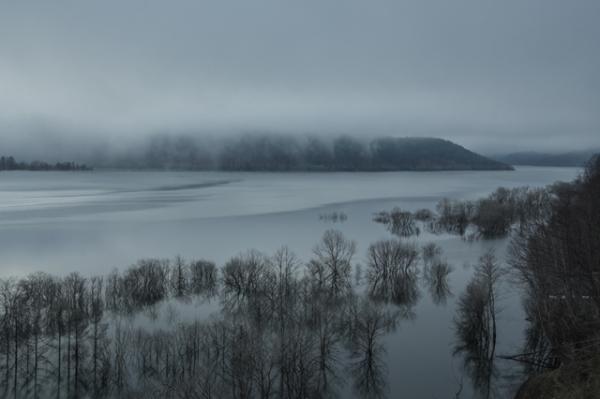早朝のシューパロ湖木々-5898