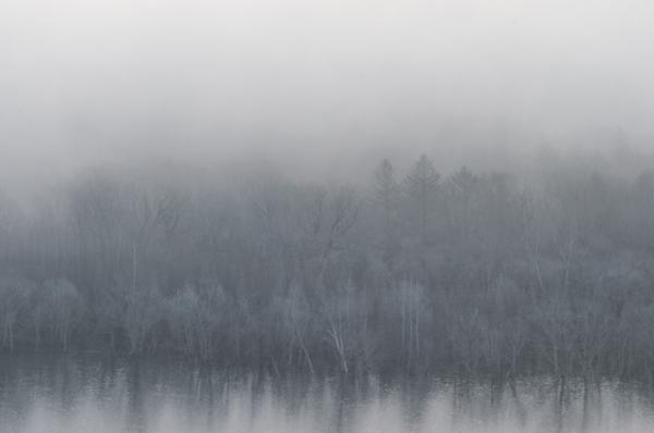 白い木々ともや-0657