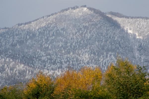 雪と紅葉-8390