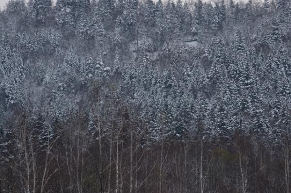 雪の日1-8367