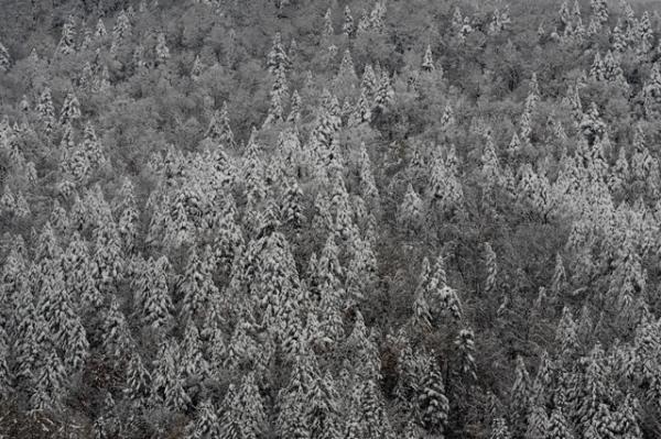 雪の日2-8380