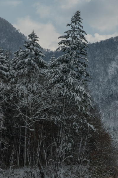 雪の日5-8385
