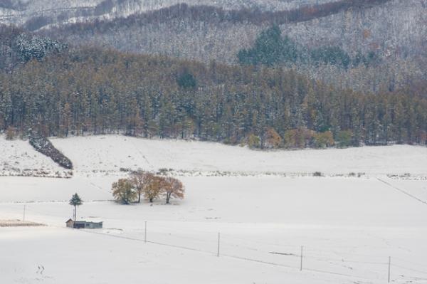 雪の日4-8396