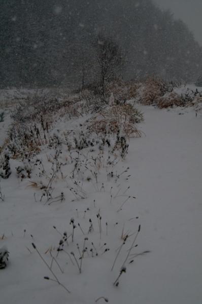 大雪降る@