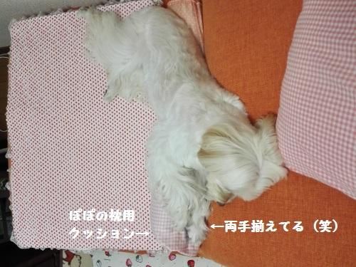 IMG_20151016_144745 (500x375)
