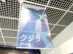 クジラ20150924